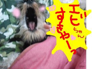 snap_jirokkosan_200811611850.jpg