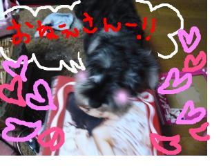 snap_jirokkosan_20081161514.jpg