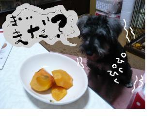 snap_jirokkosan_200811615520.jpg