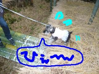 snap_jirokkosan_2008121235714.jpg