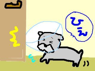 snap_jirokkosan_2008123165843.jpg