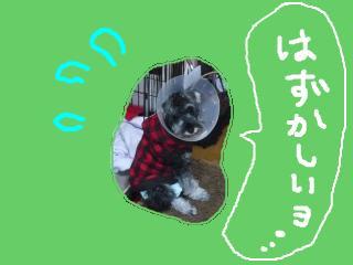 snap_jirokkosan_2009101322.jpg