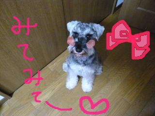 snap_jirokkosan_200911004443.jpg