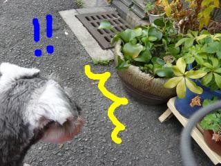 snap_jirokkosan_2009110212916.jpg