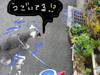 snap_jirokkosan_2009110213131.jpg