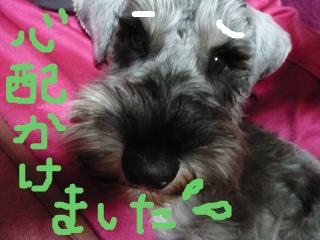 snap_jirokkosan_2009116215244.jpg