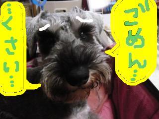 snap_jirokkosan_2009116222436.jpg