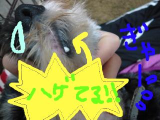 snap_jirokkosan_200914171222.jpg