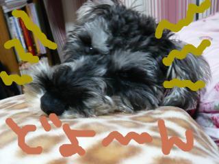 snap_jirokkosan_20092120108.jpg