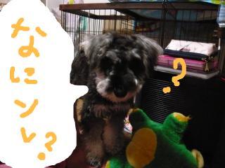 snap_jirokkosan_20093322551.jpg
