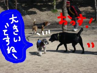 snap_jirokkosan_200934204632.jpg