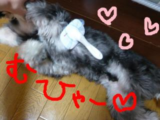 snap_jirokkosan_20094313589.jpg