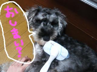 snap_jirokkosan_200943135937.jpg