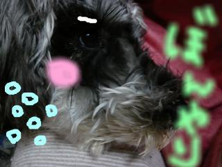 snap_jirokkosan_200943143217.jpg