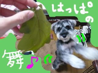 snap_jirokkosan_20095222138.jpg