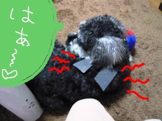 snap_jirokkosan_200954105215.jpg