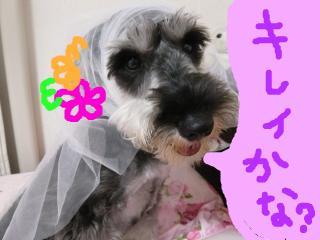 snap_jirokkosan_200956195251.jpg