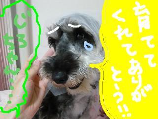 snap_jirokkosan_20095619570.jpg