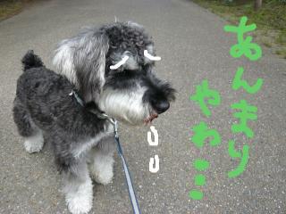 snap_jirokkosan_2009622351.jpg