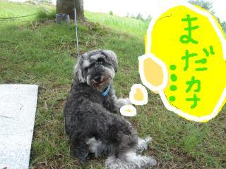 snap_jirokkosan_200973203241.jpg