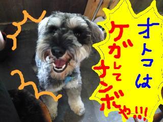 snap_jirokkosan_200974235214.jpg
