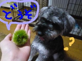 snap_jirokkosan_200980232025.jpg