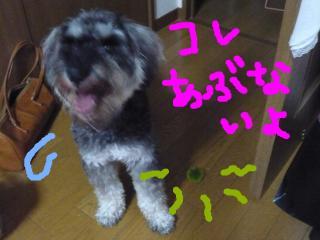 snap_jirokkosan_200980232436.jpg