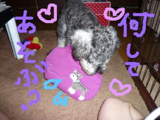 snap_jirokkosan_200990204157.jpg