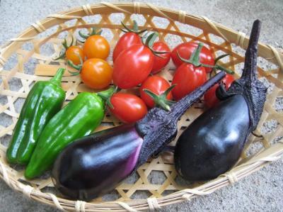 地中海トマト022