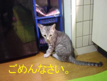 blog015.jpg