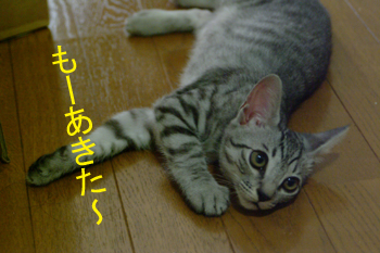 blog022.jpg