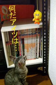 blog026.jpg