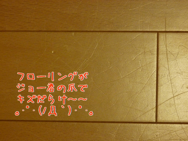 XA51c.jpg