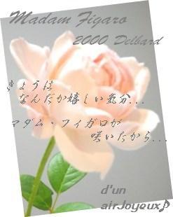 20081018マダム・フィガロ-6