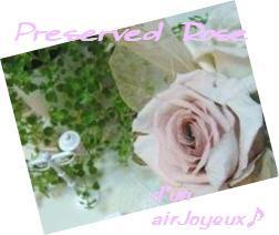 preserved -rose081026ss