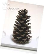 pine cone-ss