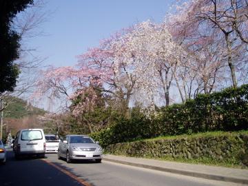 京都 kohi 405-1