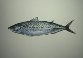 gomasaba