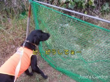 08-11-09_09.jpg