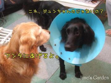 09-03-10_05.jpg