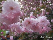 09-04-19_107_20090423132215.jpg