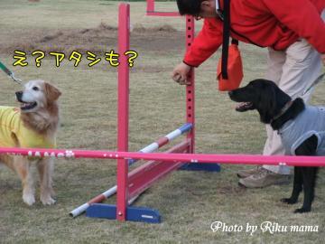 2008_1130F100111.jpg