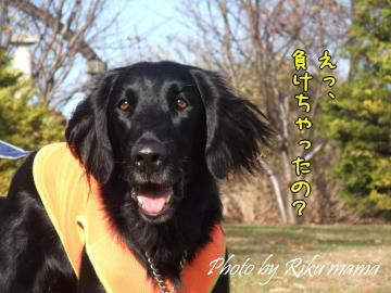 2008_1221F100041.jpg
