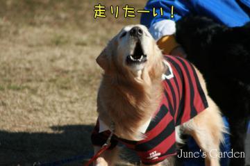 2009_02_01_009.jpg