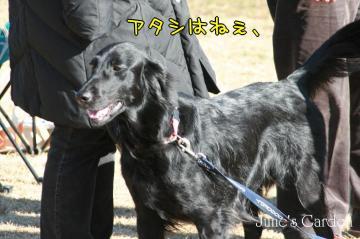 2009_02_01_016.jpg