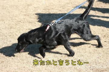 2009_02_01_026.jpg