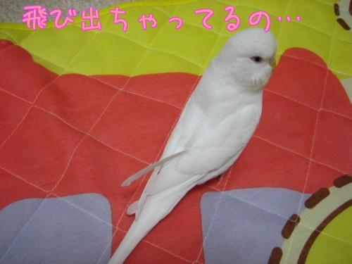 ゆきの羽①