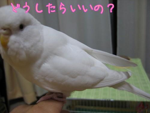 ゆきの羽②
