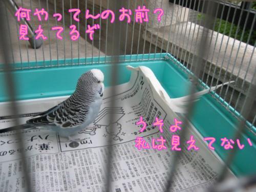潜るゆき②
