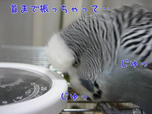 はなの目③